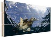 Een bruine gent gefotografeerd vanuit het water Vurenhout met planken 40x20 cm - Foto print op Hout (Wanddecoratie)