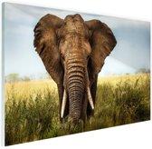 Afrikaanse olifant vooraanzicht Glas 90x60 cm - Foto print op Glas (Plexiglas wanddecoratie)