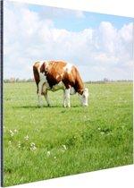 FotoCadeau.nl - Bruin-witte koe in de wei Aluminium 50x50 cm - Foto print op Aluminium (metaal wanddecoratie)