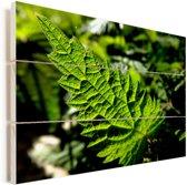 Een door de zon verlicht brandnetelblad Vurenhout met planken 160x120 cm - Foto print op Hout (Wanddecoratie) XXL / Groot formaat!