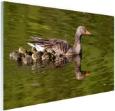Ganzen in het water Glas 90x60 cm - Foto print op Glas (Plexiglas wanddecoratie)