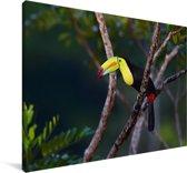 Een toekan zit hoog in een boom Canvas 180x120 cm - Foto print op Canvas schilderij (Wanddecoratie woonkamer / slaapkamer) XXL / Groot formaat!