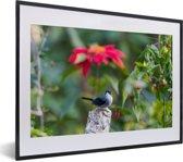 Foto in lijst - Timalia tussen de felgekleurde bloemen fotolijst zwart met witte passe-partout klein 40x30 cm - Poster in lijst (Wanddecoratie woonkamer / slaapkamer)