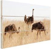 Struisvogels op een grasveld Hout 60x40 cm - Foto print op Hout (Wanddecoratie)