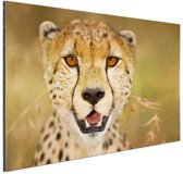 Portret jonge luipaard Aluminium 90x60 cm - Foto print op Aluminium (metaal wanddecoratie)
