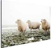 Drie schapen in de winter Aluminium 90x60 cm - Foto print op Aluminium (metaal wanddecoratie)