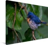 Een Azuurvliegenvanger tussen de groene bladeren Canvas 180x120 cm - Foto print op Canvas schilderij (Wanddecoratie woonkamer / slaapkamer) XXL / Groot formaat!