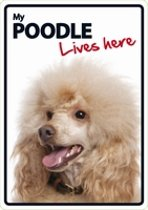 Poodle lives here