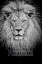 Schilderij - Leeuw in zwart wit
