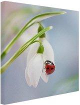 Lieveheersbeestje op een sneeuwklokje Canvas 60x80 cm - Foto print op Canvas schilderij (Wanddecoratie woonkamer / slaapkamer) / Dieren Canvas Schilderijen