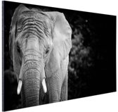 Olifant zwart-wit Aluminium 180x120 cm / XXL / Grote Poster - Wanddecoratie cm - Foto print op Aluminium (metaal wanddecoratie) cm - Foto print op Poster (wanddecoratie) / Dieren Poster