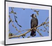 Foto in lijst - Foto van een kauw hoog in de boom fotolijst zwart met witte passe-partout klein 40x30 cm - Poster in lijst (Wanddecoratie woonkamer / slaapkamer)