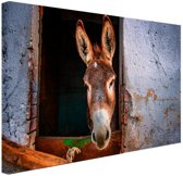 Ezel in de stal Canvas 60x40 cm - Foto print op Canvas schilderij (Wanddecoratie woonkamer / slaapkamer) / Dieren Canvas Schilderij