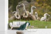 Fotobehang vinyl - Kudde vale gieren op het veld breedte 390 cm x hoogte 260 cm - Foto print op behang (in 7 formaten beschikbaar)