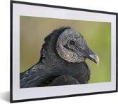 Foto in lijst - Een portret van een zwarte gier fotolijst zwart met witte passe-partout klein 40x30 cm - Poster in lijst (Wanddecoratie woonkamer / slaapkamer)