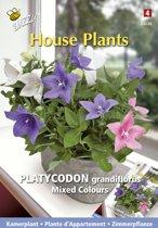 Buzzy® House Plants - Ballon Klokje (Platycodon grandiflora)