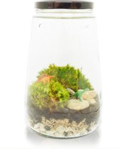 Inspicle Ecosysteem Dino - 15x25 Cm - Transparant
