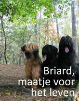 Briard, maatje voor het leven