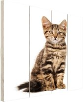 Poserende kitten Hout 120x160 cm - Foto print op Hout (Wanddecoratie) XXL / Groot formaat!