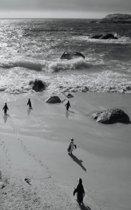 Alive! little penguin friends - Black and White - Photo Art Notebooks (5 x 8 series)