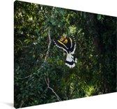 Sierlijke dubbelhoornige neushoornvogel in de groene natuur Canvas 60x40 cm - Foto print op Canvas schilderij (Wanddecoratie woonkamer / slaapkamer)