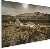 Lama's bij de Colca Canyon in Peru Plexiglas 180x120 cm - Foto print op Glas (Plexiglas wanddecoratie) XXL / Groot formaat!
