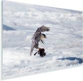 Mooie slechtvalk landt op het ijs Plexiglas 180x120 cm - Foto print op Glas (Plexiglas wanddecoratie) XXL / Groot formaat!