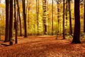 Papermoon Autumn Forest Vlies Fotobehang 250x186cm 5-Banen