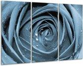 Glas schilderij Bloem, Roos | Blauw | 120x80cm 3Luik | Foto print op Glas |  F006522