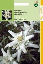 Hortitops Zaden - Leontopodium Alpinum (Edelweiss)
