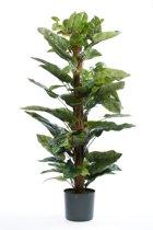 Emerald - Philodendron plant - In plastic pot - 120 cm - Groen