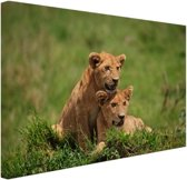 Twee welpen in gras Canvas 60x40 cm - Foto print op Canvas schilderij (Wanddecoratie)