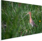 Zijaanzicht van een Grutto in het gras Plexiglas 90x60 cm - Foto print op Glas (Plexiglas wanddecoratie)
