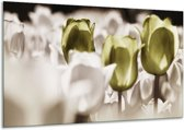 Glasschilderij Tulpen   Bruin, Groen, Wit   120x70cm 1Luik   Foto print op Glas    F002775