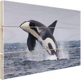Springende orka Hout 30x20 cm - Foto print op Hout (Wanddecoratie)