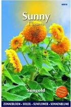 Zonnebloem Sungold - Helianthus annuus (Sunflowers) - set van 9 stuks