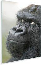 Een verbazingwekkende Gorilla Plexiglas 80x120 cm - Foto print op Glas (Plexiglas wanddecoratie)