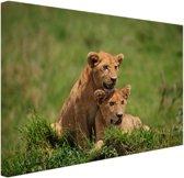 Twee welpen in gras Canvas 120x80 cm - Foto print op Canvas schilderij (Wanddecoratie)