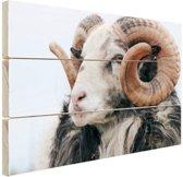 Schaap met horens Hout 120x80 cm - Foto print op Hout (Wanddecoratie)