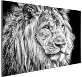 Leeuw in de winter  Aluminium 180x120 cm - Foto print op Aluminium (metaal wanddecoratie)