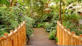 Fotobehang Brug, Natuur | Groen | 312x219cm