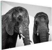 Nieuwsgierige olifanten zwart-wit Glas 90x60 cm - Foto print op Glas (Plexiglas wanddecoratie)