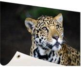 Nieuwsgierige luipaard foto Tuinposter 60x40 cm - klein - Tuindoek / Buitencanvas / Schilderijen voor buiten (tuin decoratie)