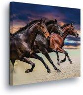 Horses Canvas Print 80cm x 80cm