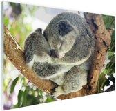Knuffelende koala moeder en joey Glas 30x20 cm - klein - Foto print op Glas (Plexiglas wanddecoratie)