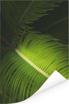 Een close-up van een lichtgekleurde adelaarsvaren Poster 80x120 cm - Foto print op Poster (wanddecoratie woonkamer / slaapkamer)