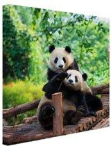 Spelende pandas Canvas 50x50 cm - Foto print op Canvas schilderij (Wanddecoratie woonkamer / slaapkamer) / Dieren Canvas Schilderijen