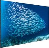 School met vissen Aluminium 180x120 cm - Foto print op Aluminium (metaal wanddecoratie) XXL / Groot formaat!