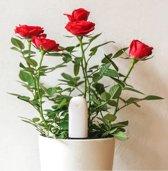 Xiaomi HHCC - Flower Care Smart plant sensor