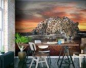 Luipaard  - Fotobehang 368 x 254 cm